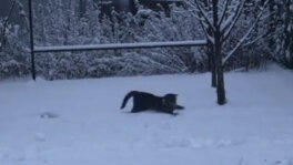 Koci fan zimy