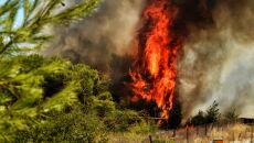 Pożar w Grecji (PAP/EPA/VASSILIS PSOMAS)