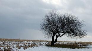 Prognoza pogody na jutro: śnieżnie i wietrznie. Do trzech stopni