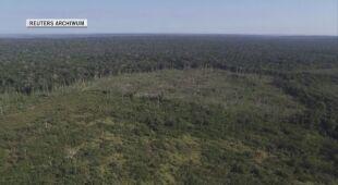 Zniszczone brazylijskie lasy deszczowe (archiwum)