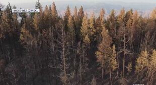Skutki pożaru w stanie Waszyngton